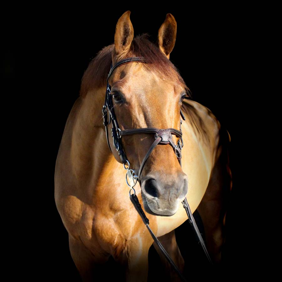 about horse search uk