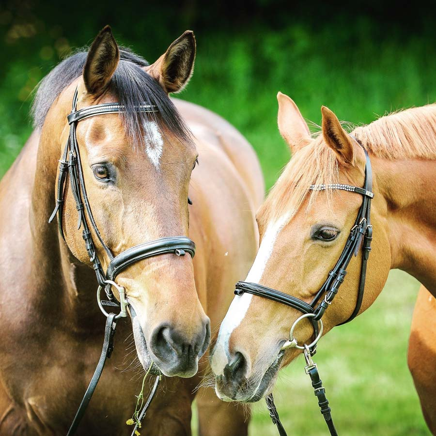 search for a horse in the UK