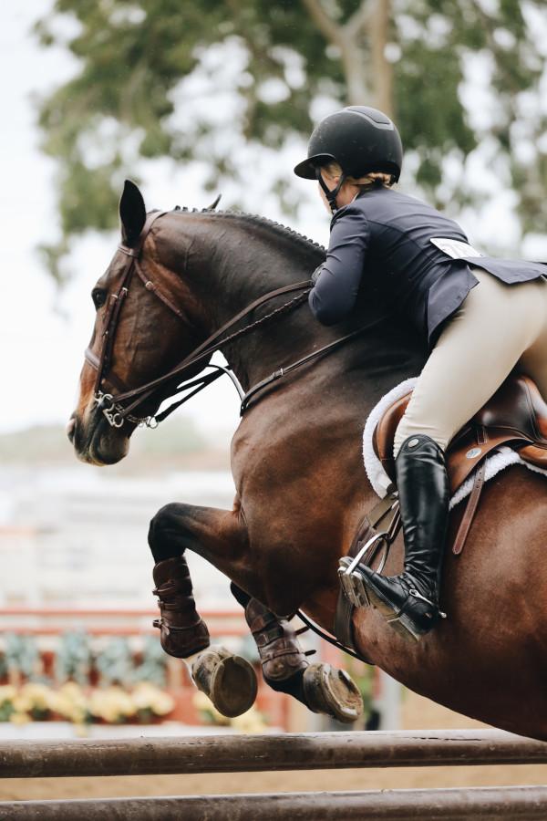 Horse searcher