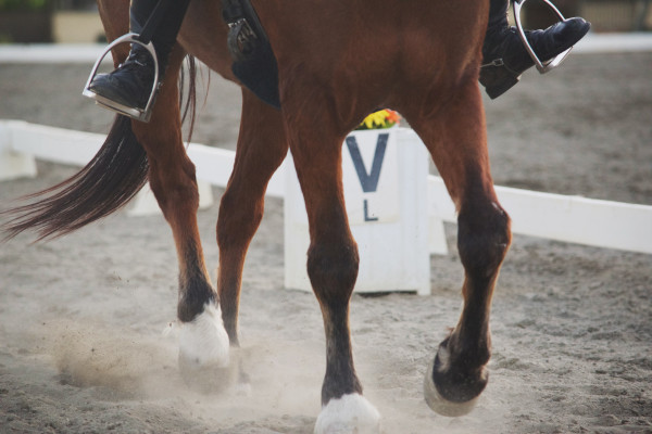 Horse Search- Goal setting