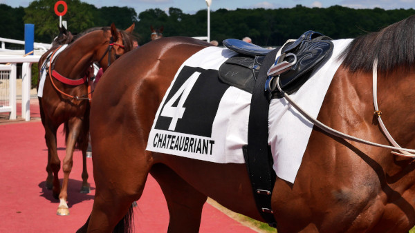 pros and cons of buying an ex racehorse