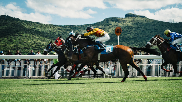 thoroughbred horses for sale uk