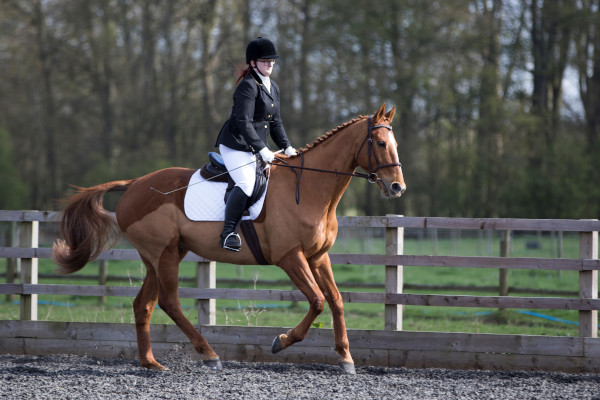 what to look for when buying a thoroughbred horse?