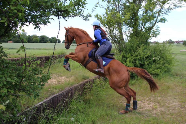 buying an ex racehorse or thoroughbred